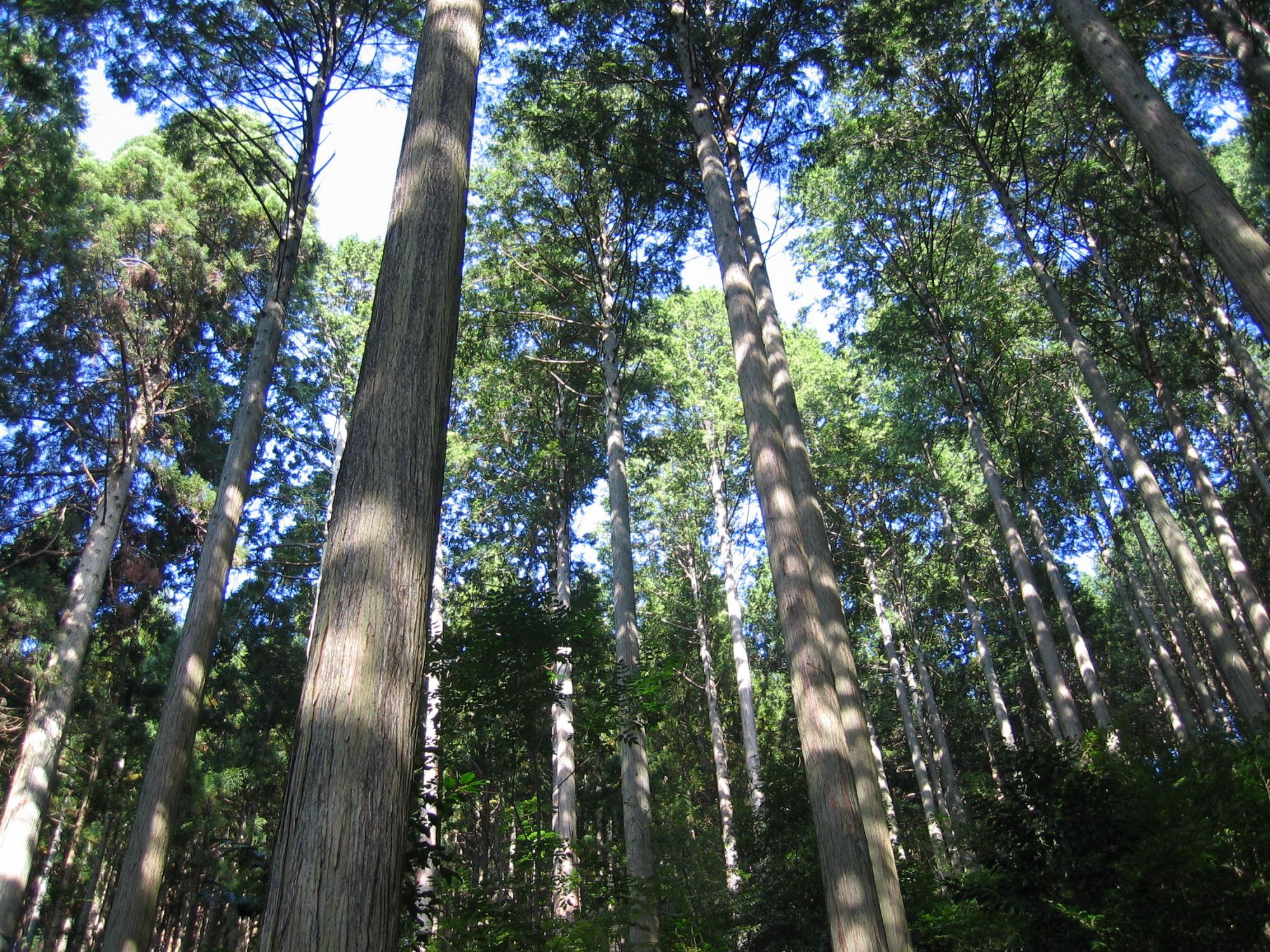 森5(手入れされた森)小.JPG