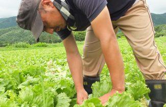 農業就業体験