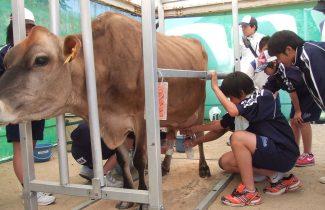 ジャージー牛体験B[見学+搾乳体験+餌やり+アイスクリーム作り]